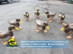 Realistic life size animal statues swimming duck DWA135